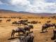Safaris im Herzen Afrikas: Auf den Spuren der Big Five