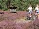 Zur Heideblüte in die Lüneburger Heide