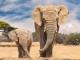 Qatar Airways Extends USAID ROUTES Partnership to Combat Wildlife Trafficking