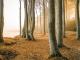 Kraniche bestaunen und Kneippen gehen: Herbsturlaub in Mecklenburg-Vorpommern